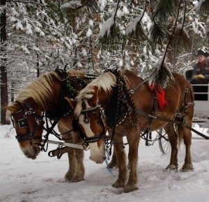 Holiday horse carriage rides in Sisters, Oregon