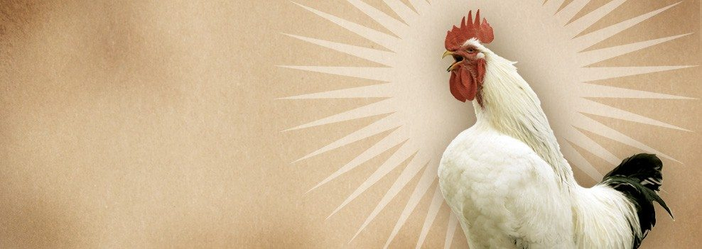 It's a new day in marketing - rooster
